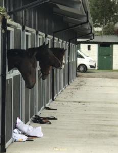The horses at TBEX Killarney Ireland