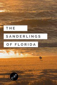 Ft. Lauderdale Sanderlings