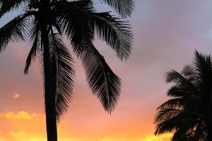 Palm trees and sky CancerRoadTrip Cancer Road Trip