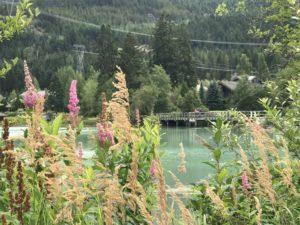 #Whistler #hellobc #bc #CancerRoadTrip #Mountains #hiking
