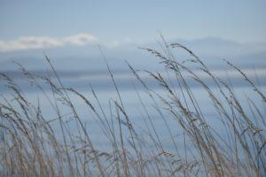 CancerRoadTrip Cancer Road Trip Whidbey Island