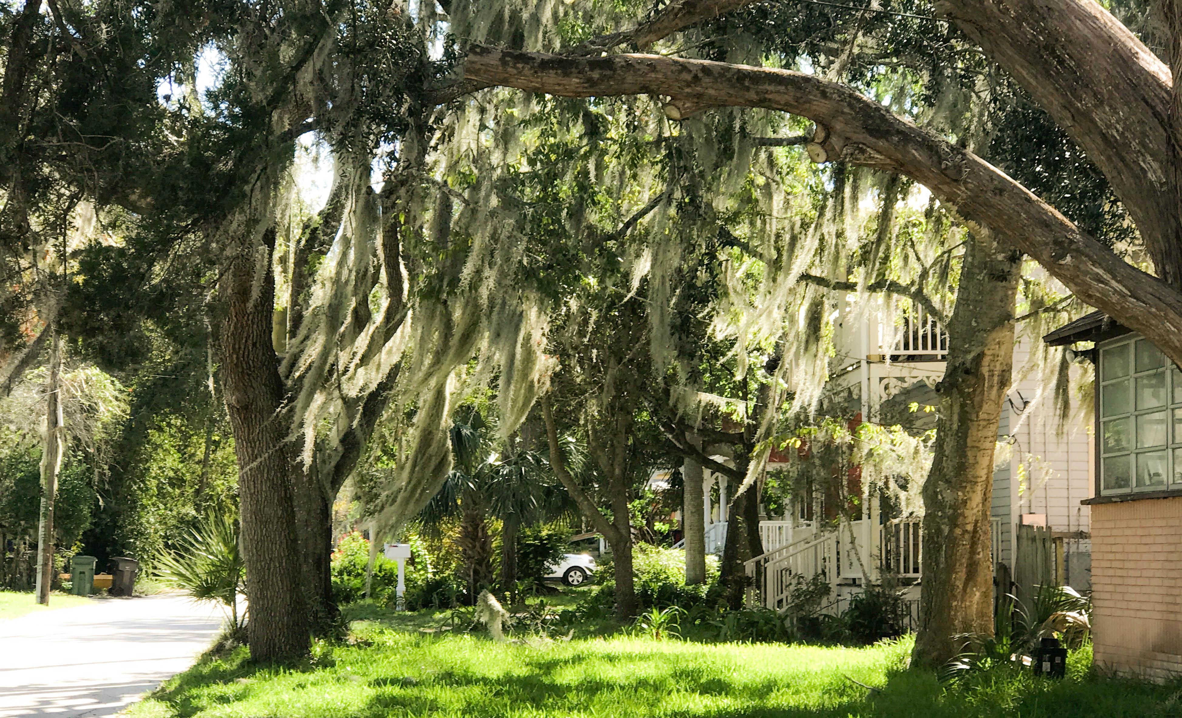 Lincolnville St. Augustine Florida
