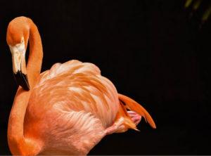 Ft. Lauderdale Flamingos