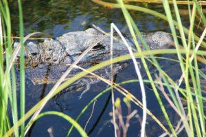 Ft. Lauderdale Everglades