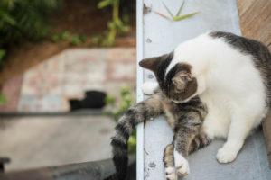 6 toed cats Key West Hemingway