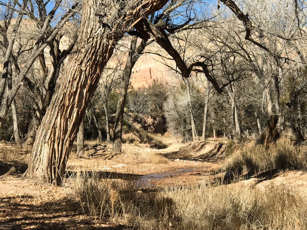 Cancer-Road-Trip Street at Ghost Ranch NM