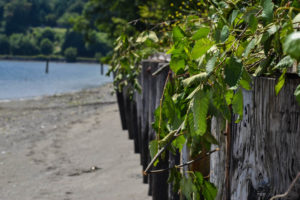 Vashon Island: The Photo Gallery