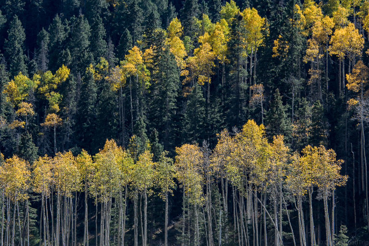 Fall color New Mexico, Cancer, CancerRoadTrip, Taos, Fall