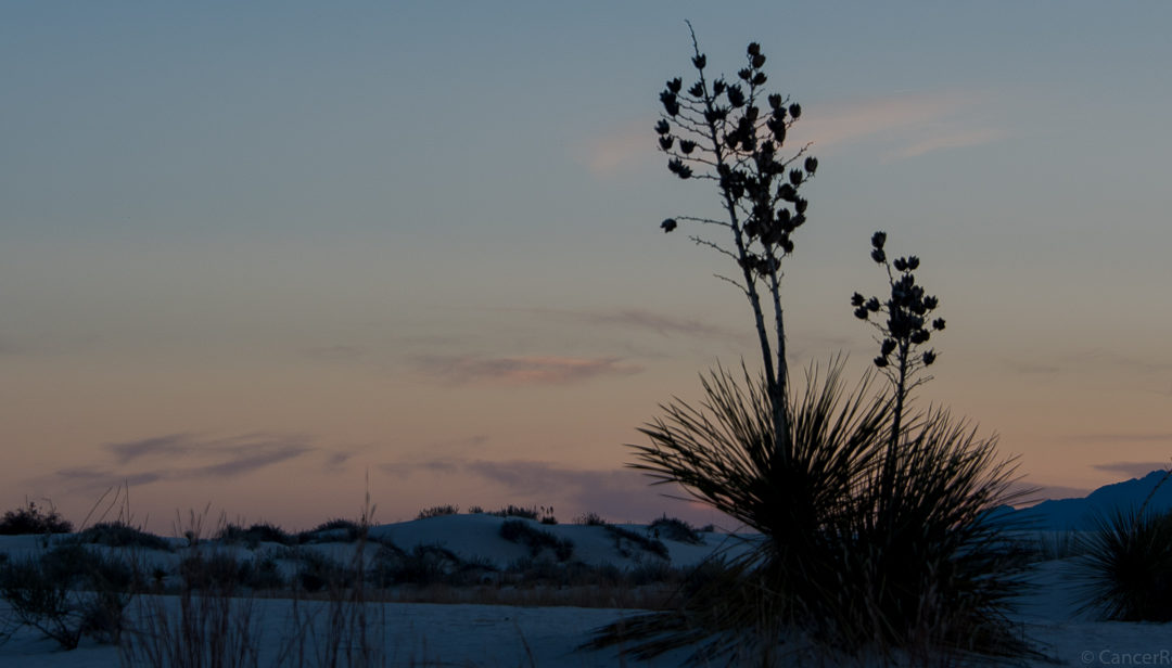 New Mexican Road Trip: White Sands to Mesilla