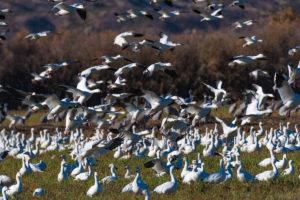 Bosque del Apache, Wildlife Photography, Bird Photography