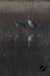 Bosque del Apache, Wildlife Photography, Bird Photography