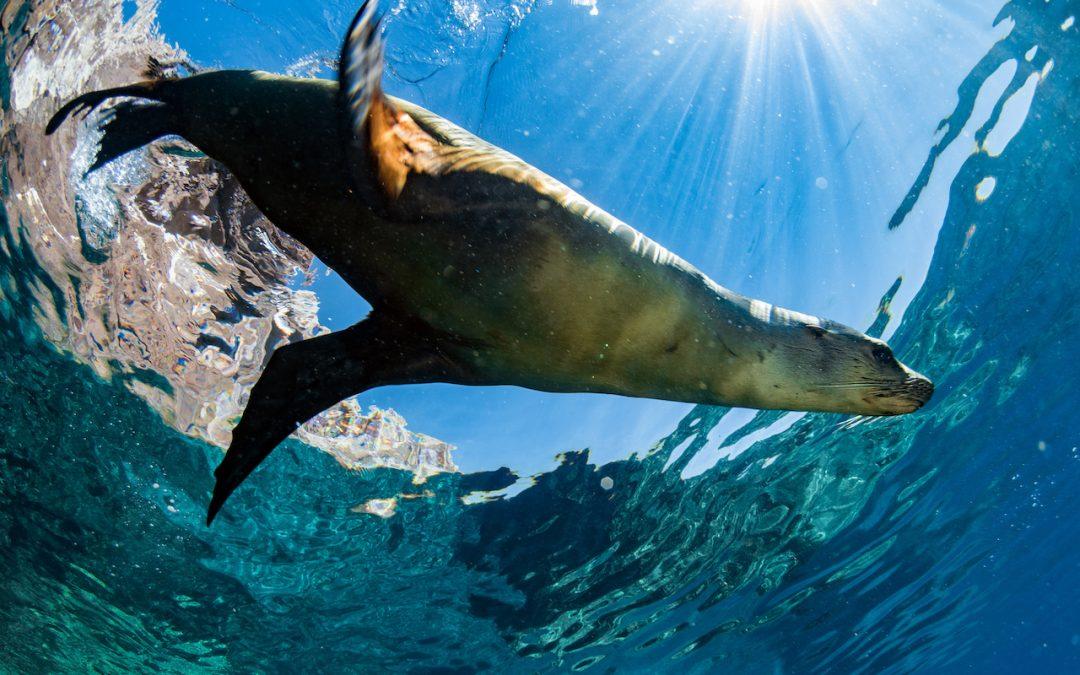 Visiting the Galapagos