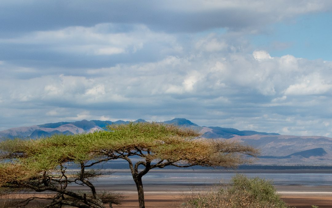 Tanzania Photo Safari: Lake Manyara