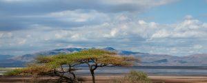 Tanzania Photo Safari: Lake Manyara