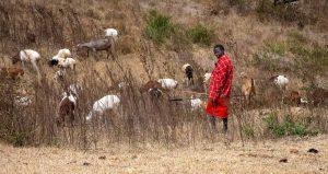 photos from safari