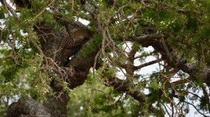 Tree Climbing Cats